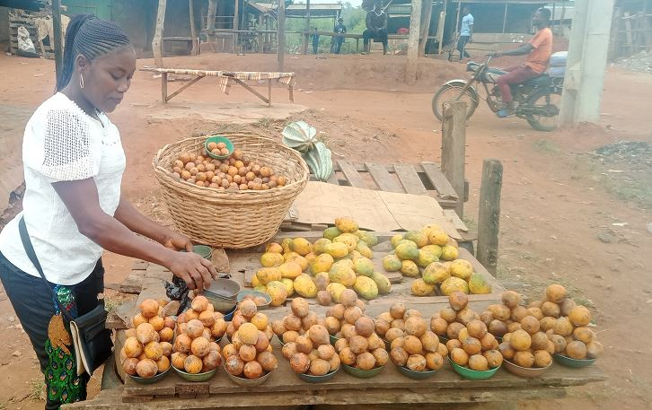 Socio-economic contributions of forest products to livelihoods in Yewa north local government ogun State Nigeria