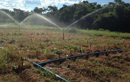 Eficiência e uniformidade de distribuição de água via aspersores em batata-doce no sul tocantinense