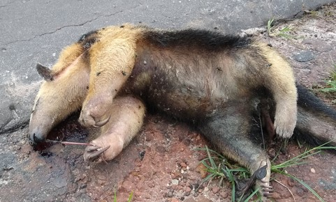 Survey of wild vertebrates killed by run over on a Brazilian state highway